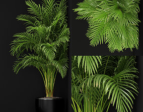 Plants collection 259 3D model