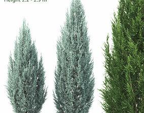 Juniperus scopulorum 01 3D model