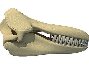 3D Killer Whale Orca Skull