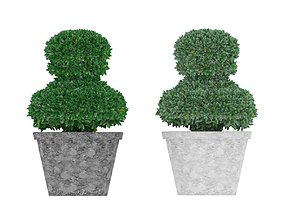 3D asset Boxwood in pawn form