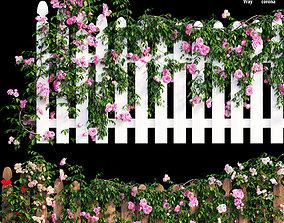 Rose plant set 48 3D