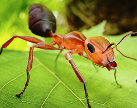 animated Ant 3D