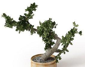 Tiny Tree In A Pot 3D