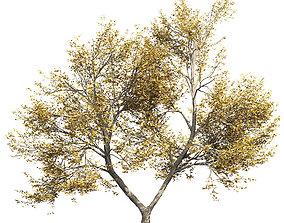 3D Ash-tree 4