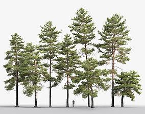 tree Pinus Sylvestris Pack 02 3D model