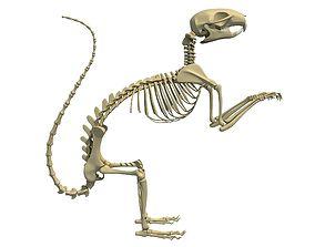 3D model Squirrel Skeleton
