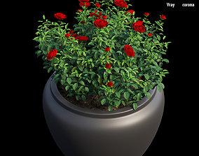 Rose plant in pot set 06 3D