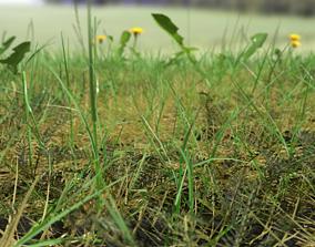 3D model Bloodwort Meadow Patch