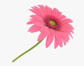3D Gerbera Pink