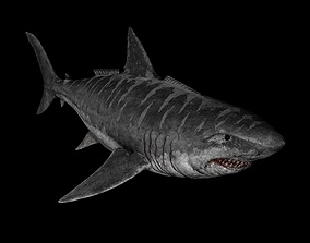 3D model rigged Megalodon Shark Dinosaur