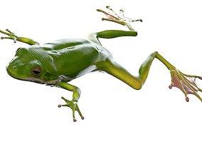 other Frog 3d model