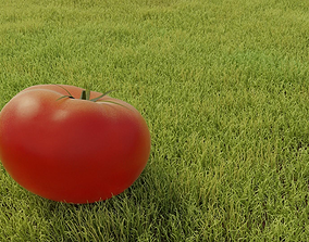 3D realistic tomatos