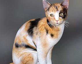 The cats 3D model