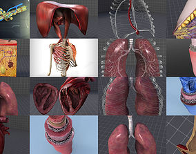 3D model Cervical and Thoracic Anatomy Collection - Neck 1