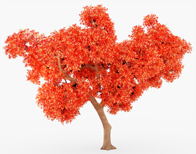 Japanese Maple Tree 3D model game-ready