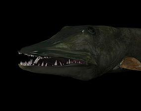 3D model MUSKIE HEAD TEXTURES