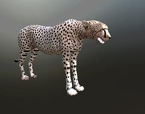 3D asset cheetah lowpoly