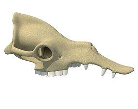 Camel Skull 3D model