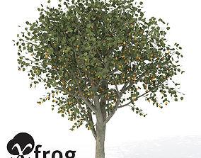 3D XfrogPlants Apricot