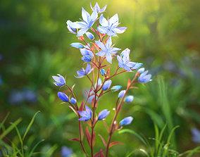 PBR 3D flower Collection vol02 Lomatogonium