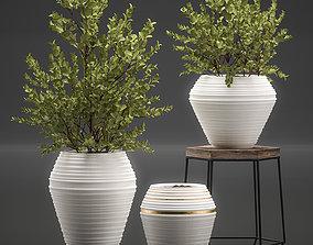 3D model Eucalyptus bush in a flowerpot for interior 1