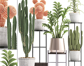 Collection of Exotic Cactus Plants 4 3D model