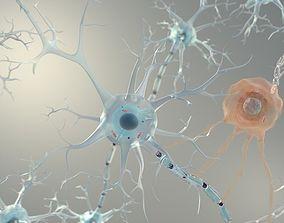 Brain Neurons for Cinema 4d 3D model
