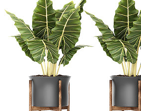 Plant pot 2 3D model