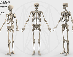 Accurate Human Skeleton 3D asset