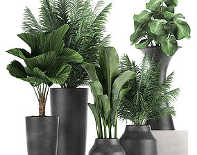 3D Collection of decorative plants in flowerpots 830