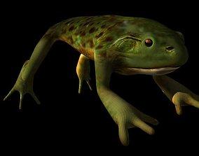3D Bull Frog
