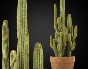 Plants collection 254 3D model