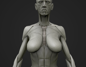 3D model Full body muscle and skeleton anatomy