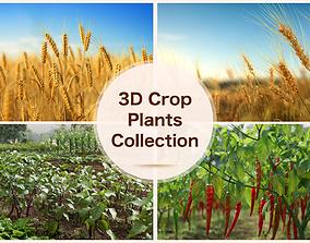 PBR 3D crop plants collection