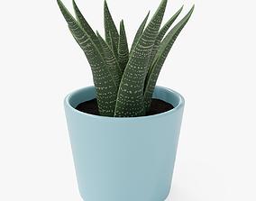 3D Decorative Succulent Plant in the pot