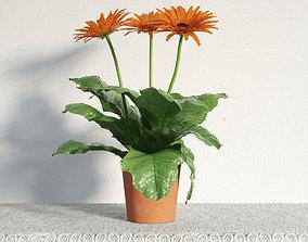 3D plant 33 am141