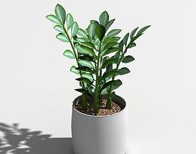 3D Zamioculcas zamiifolia