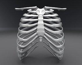 3D print model Human Rib Realistic Articulated