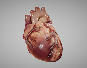 3D asset Heart Animated human