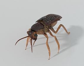 3D asset realtime Cockroach