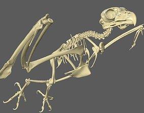 3D model Owl Skeleton