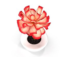 Pink Flower in White Pot 3D model