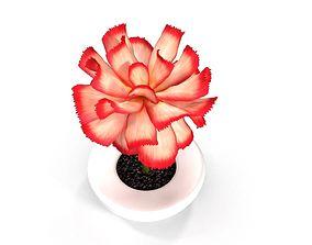 Pink Flower in White Pot 3D model