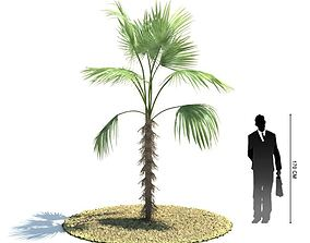 3D Young Palm Tree