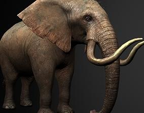 rigged Elelphant 3D model rig