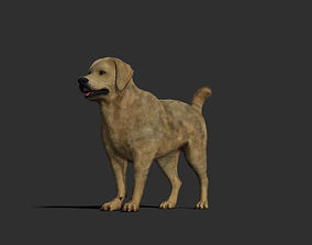 Dog rigged and animated 3D model