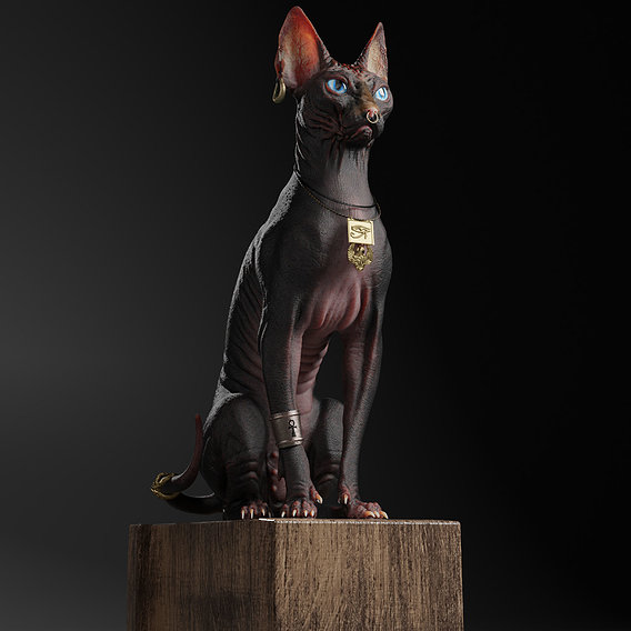 Egyptian Cat ( Sphynx)