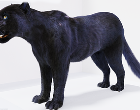 Realistic Fur Panther 02 3D Model NO RIG realtime