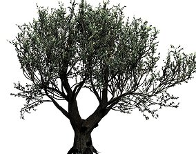 3D model African Baobab