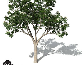 XfrogPlants Ghost Gum 3D model